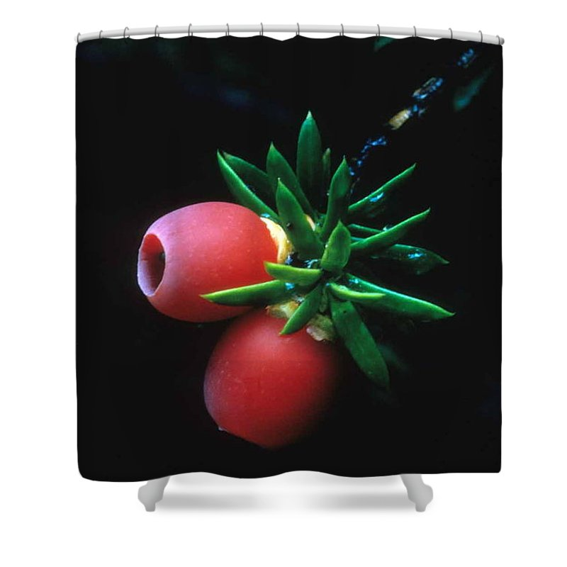 Juniper Berries Shower Curtain featuring the photograph Juniper Berries by Laurie Paci