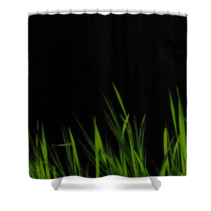 Grass Shower Curtain featuring the photograph Just A Little Grass by Donna Blackhall