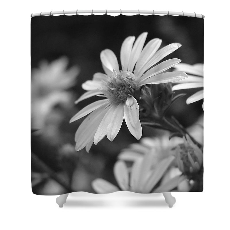 Shower Curtain featuring the photograph Just Black And White by Luciana Seymour