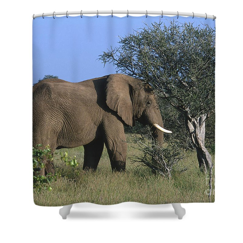 Africa Shower Curtain featuring the photograph Just Browsing by Sandra Bronstein