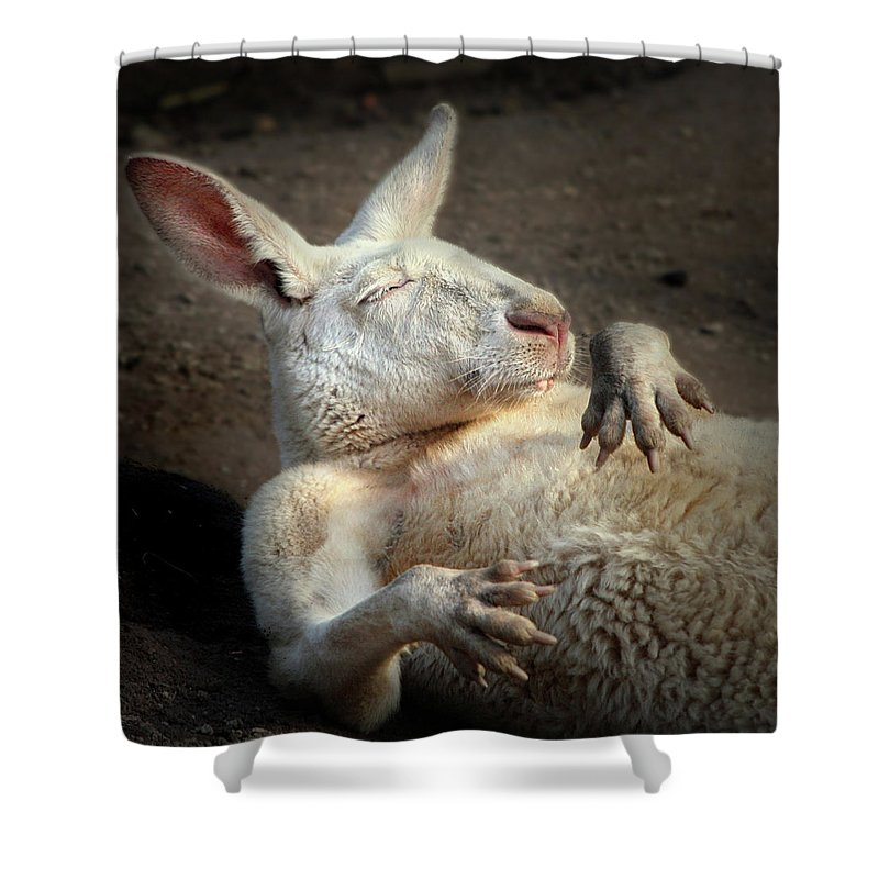 Albino Red Kangaroo Shower Curtain featuring the photograph Just Chilling by Marion Cullen