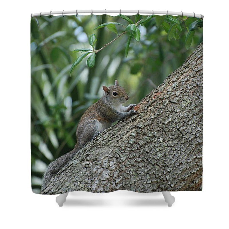 Squirrels Shower Curtain featuring the photograph Just Chilling Out by Rob Hans