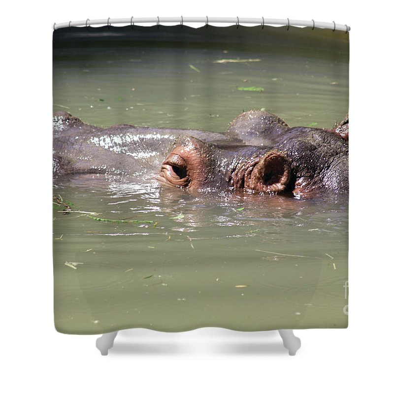 Zoo Shower Curtain featuring the photograph Just For A Breath by Alycia Christine