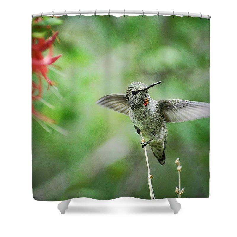 Hummingbird Shower Curtain featuring the photograph Just Hummin' Along by Saija Lehtonen