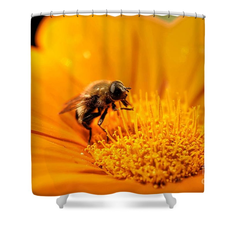 Chris Fleming Shower Curtain featuring the photograph Just Plain Busy by Chris Fleming
