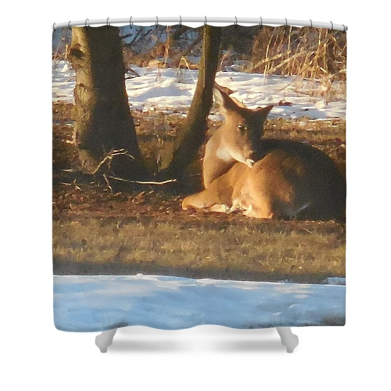 Deer Shower Curtain featuring the photograph Just Relaxing by Rebecca Mento