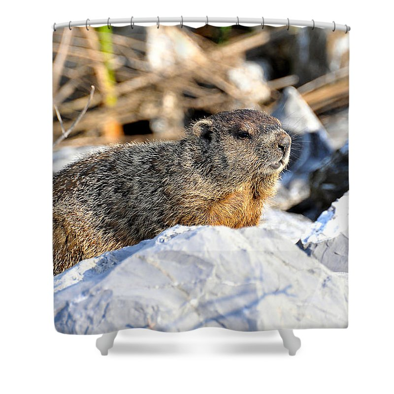 Ground Hog Shower Curtain featuring the photograph Just Relaxing by Todd Hostetter