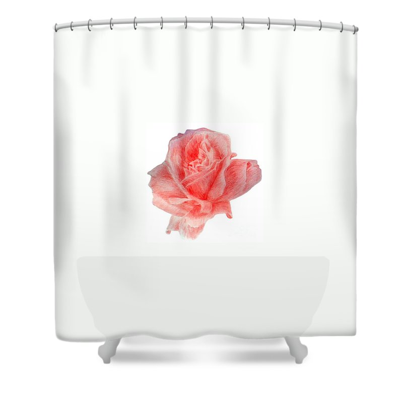 Drawing Flower Rose Colored Pensils Paper Shower Curtain featuring the drawing Just Rose by Nadi Sabirova