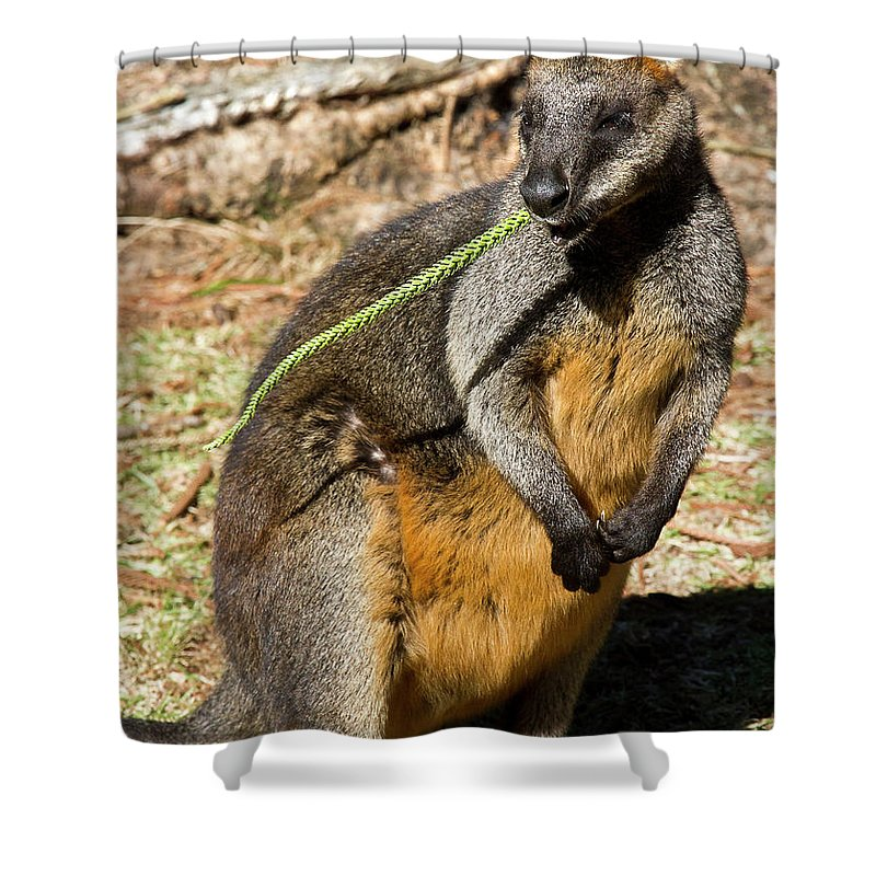 Swamp Shower Curtain featuring the photograph Just Snacking by Miroslava Jurcik
