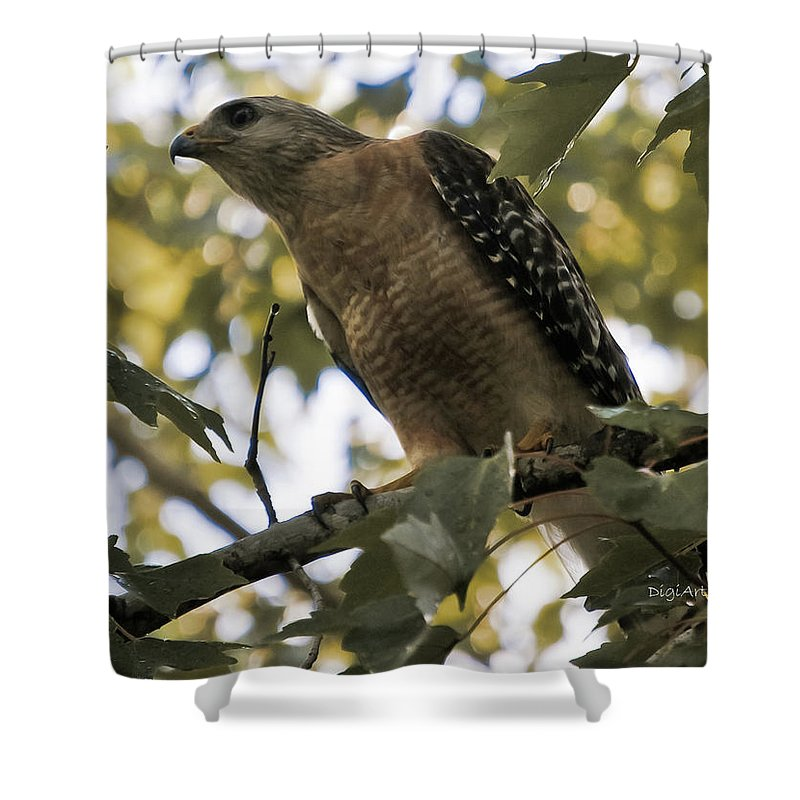 Red Shouldered Hawk Shower Curtain featuring the photograph Just Spotted Dinner by DigiArt Diaries by Vicky B Fuller