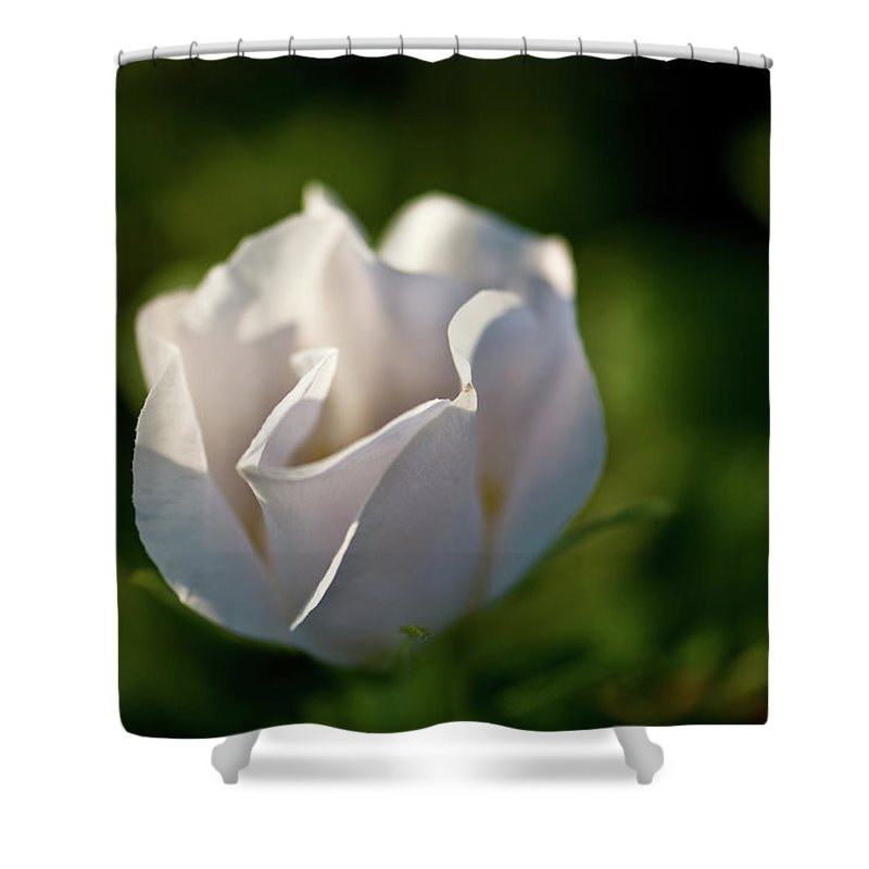 wild Rose Shower Curtain featuring the photograph Just White by Paul Mangold