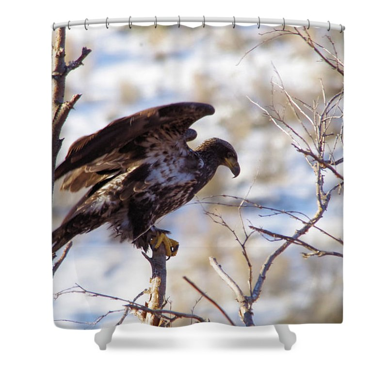 Juvenile Eagle Shower Curtain featuring the photograph Juvenile Eagle Taking Off  by Jeff Swan