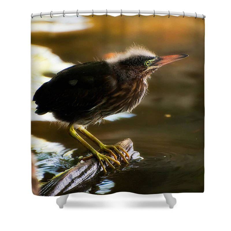 Animal Shower Curtain featuring the photograph Juvenile Green Heron by Rich Leighton