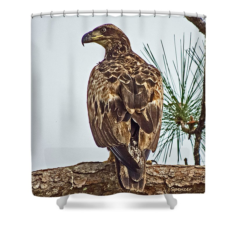 Bird Shower Curtain featuring the photograph Juvenile by T Guy Spencer