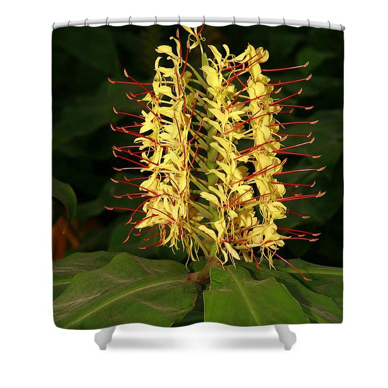 Hedychium Gardenarium Shower Curtain featuring the photograph Kahili Ginger by Gaspar Avila