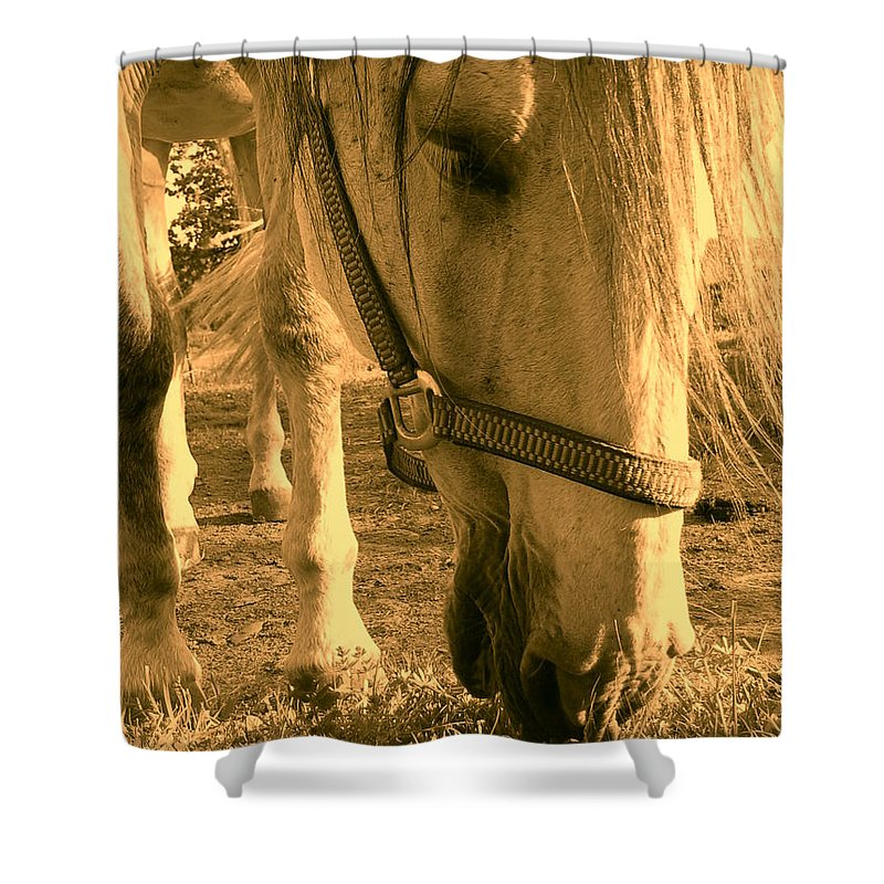 Orphelia Aristal Shower Curtain featuring the photograph Kahn I by Orphelia Aristal
