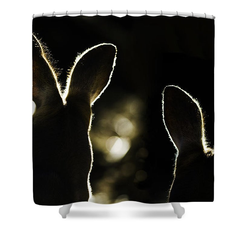Kangaroo Shower Curtain featuring the photograph Kangaroos Backlit by Sheila Smart Fine Art Photography