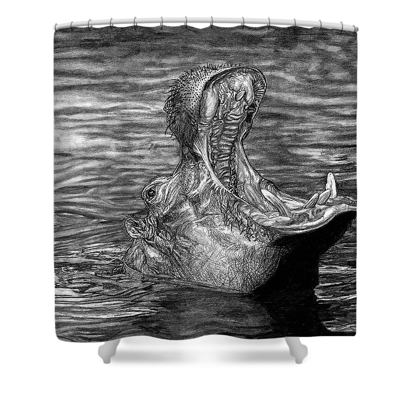 Hippo Shower Curtain featuring the drawing Keeper Of The Swamp - African Hippo by Dan Pearce