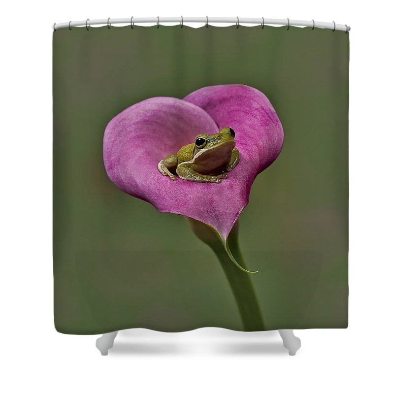 Calla Shower Curtain featuring the photograph Kermit Hangs Out by Susan Candelario