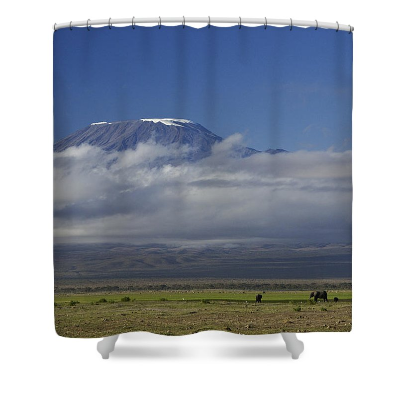Africa Shower Curtain featuring the photograph Kilimanjaro With Elephants by Michele Burgess
