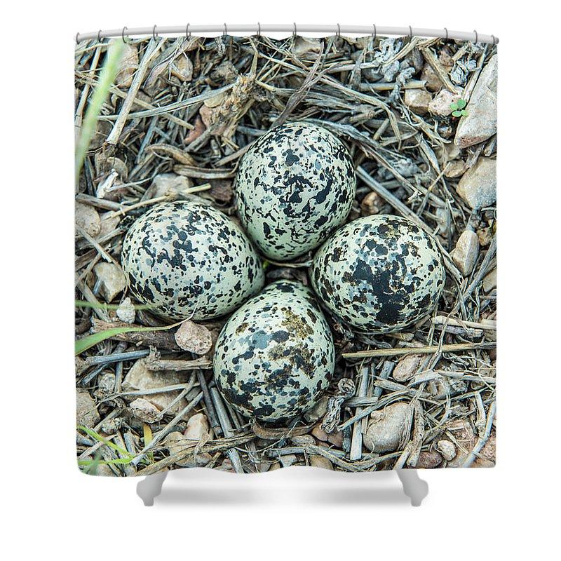 Killdeer Shower Curtain featuring the photograph Killdeer Eggs by Kevin McCollum