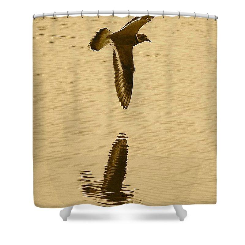 Killdeer Shower Curtain featuring the photograph Killdeer Over The Pond by Carol Groenen