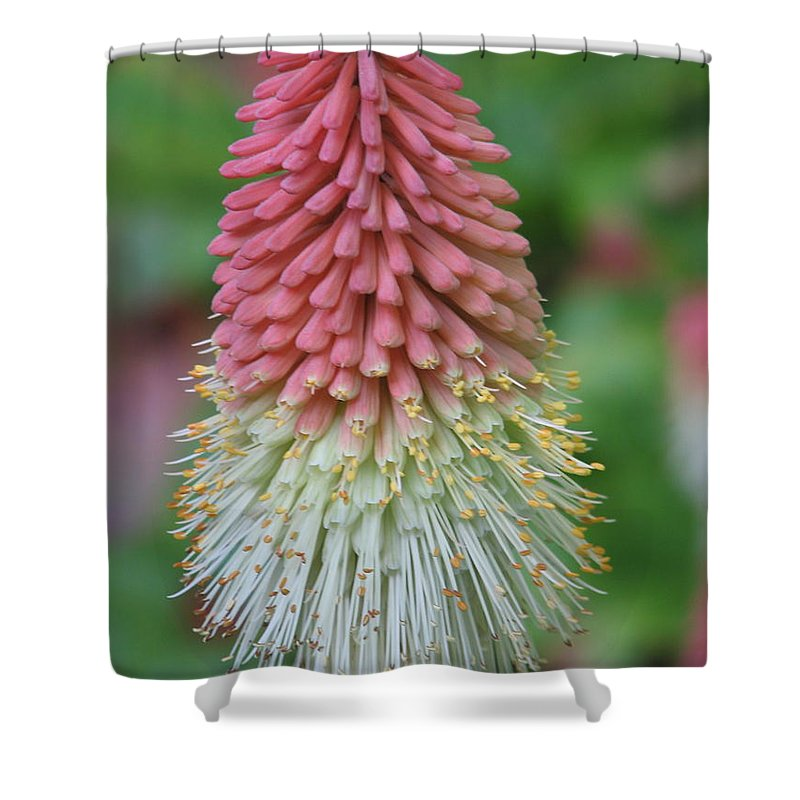 Flower Shower Curtain featuring the photograph Kilmokea by Kelly Mezzapelle