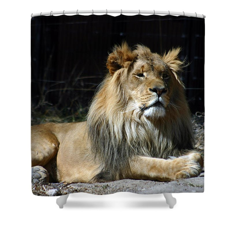 Lion Shower Curtain featuring the photograph King by Anthony Jones