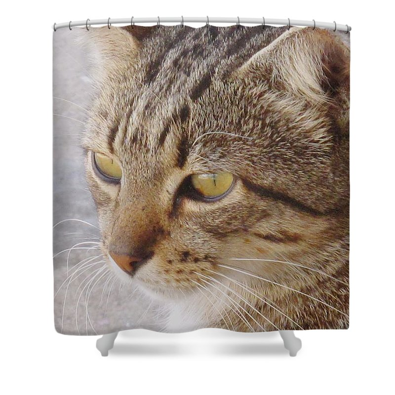 Cat Shower Curtain featuring the photograph King Cat by Ian MacDonald