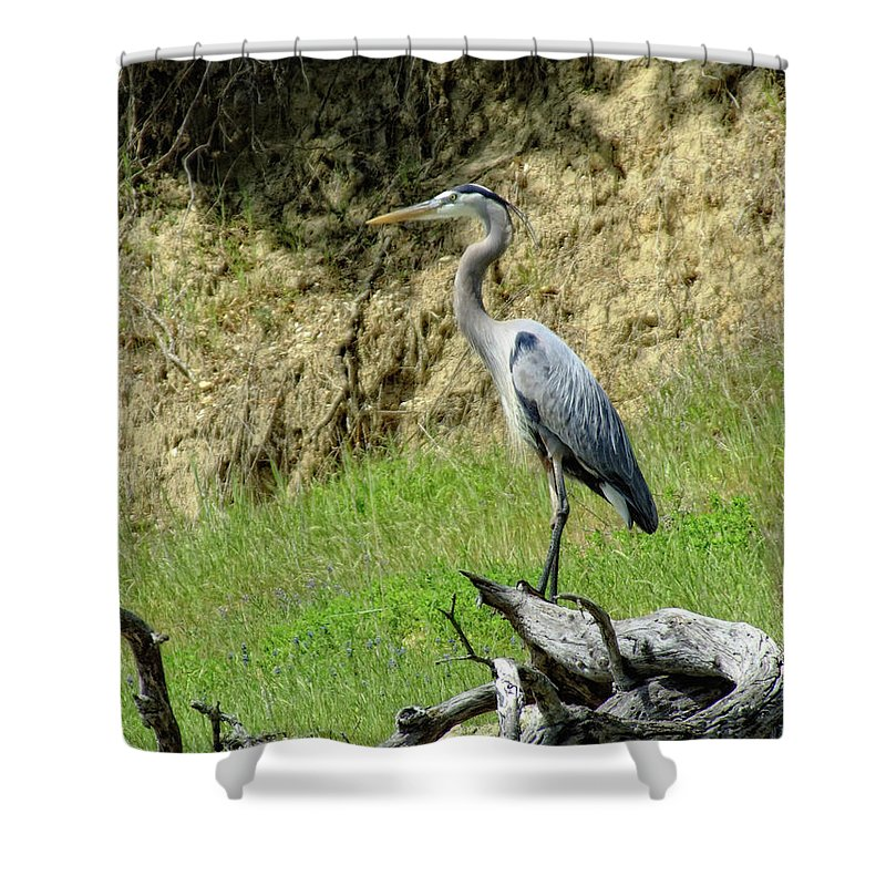 Heron Shower Curtain featuring the photograph King Heron by Donna Blackhall