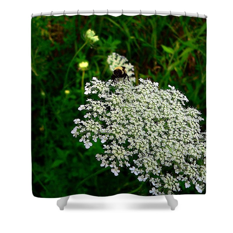 Bumblebee Shower Curtain featuring the photograph King Of The Flower by RiaL Treasures