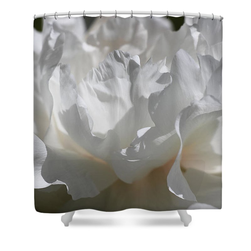 Peony Shower Curtain featuring the photograph King Of The Flowers by Iryna Goodall
