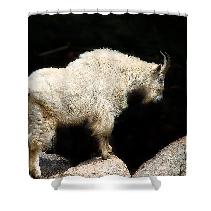 Wildlife Shower Curtain featuring the photograph King Of The Mountain by Anthony Jones