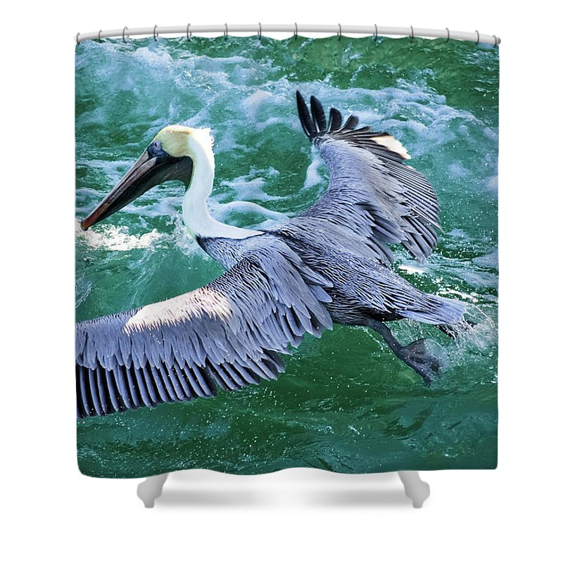 Pelican Shower Curtain featuring the photograph King Pelican by Clarence Ratliff