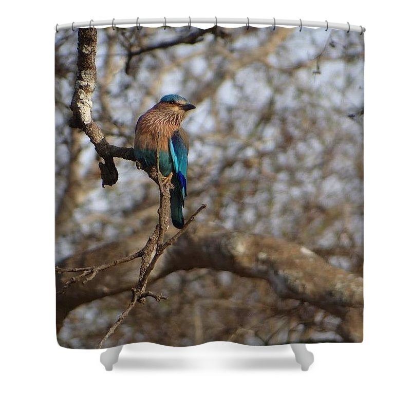 Photograph Shower Curtain featuring the photograph Kingfisher by Khushboo N