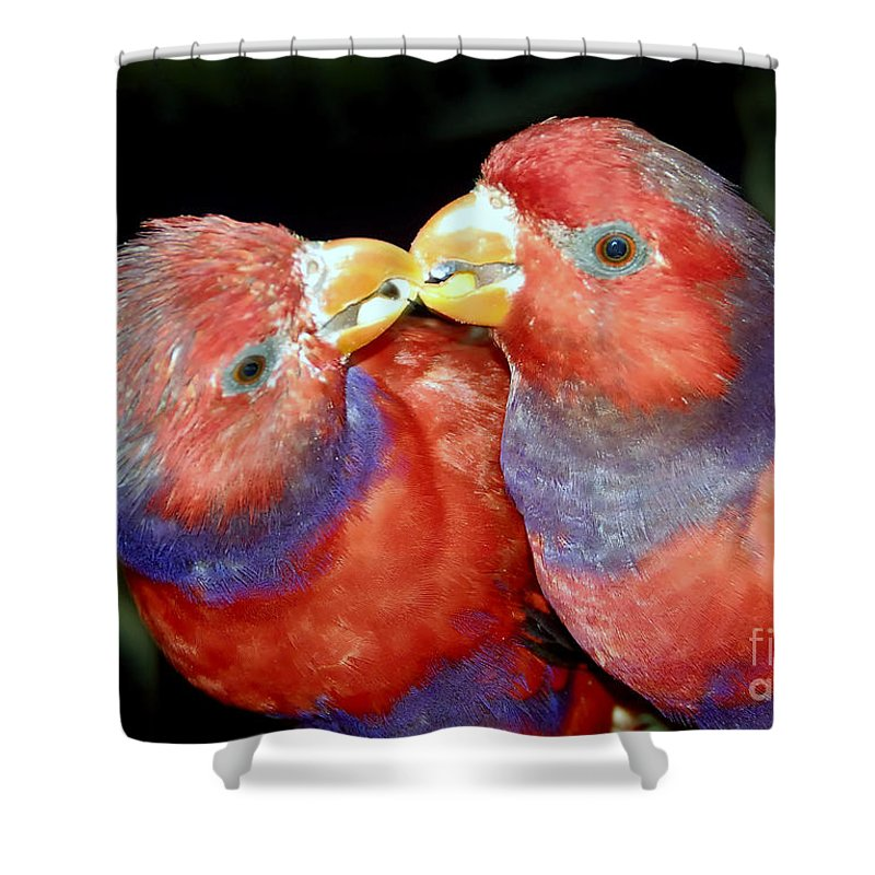 Kissing Shower Curtain featuring the photograph Kissing Birds by David Lee Thompson