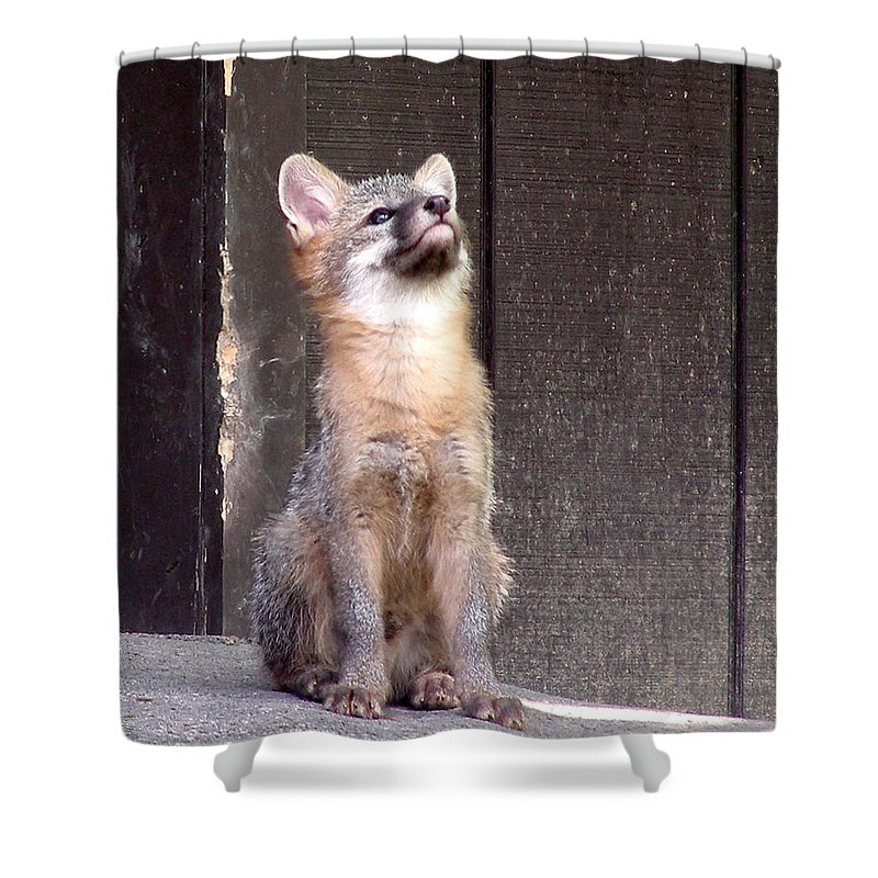 Kit Fox Shower Curtain featuring the photograph Kit Fox11 by Torie Tiffany
