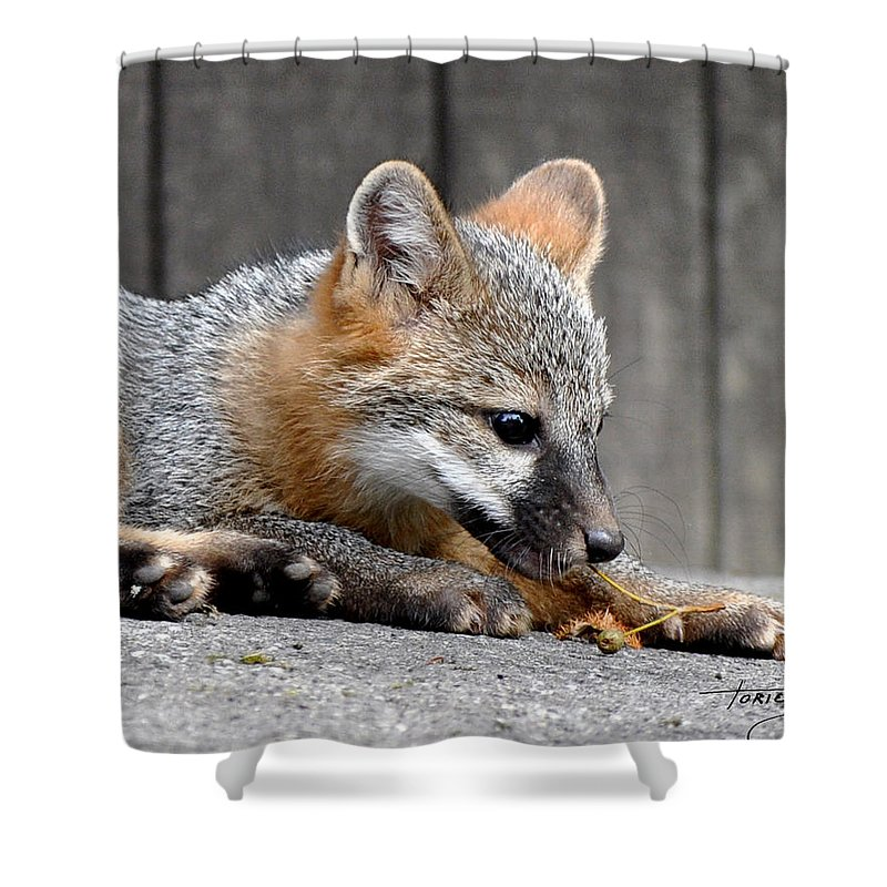 Kit Fox Shower Curtain featuring the photograph Kit Fox3 by Torie Tiffany