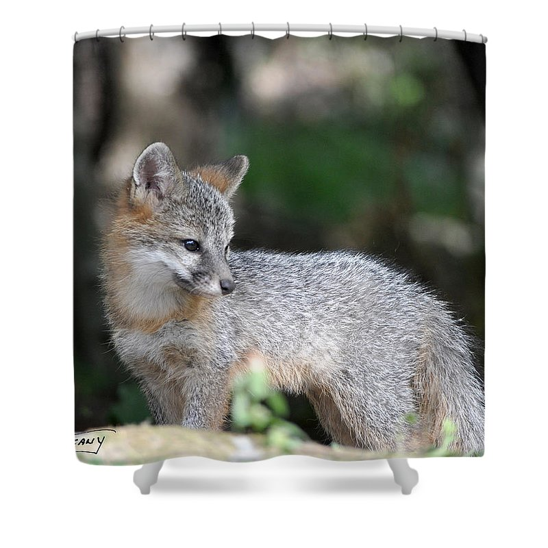 Kit Fox Shower Curtain featuring the photograph Kit Fox7 by Torie Tiffany