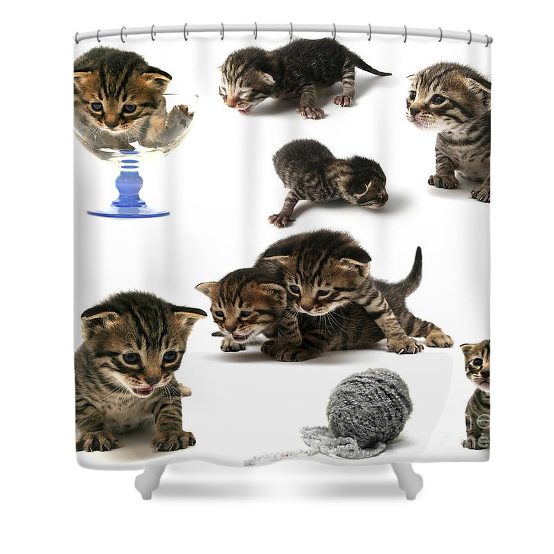Cat Cats Shower Curtain featuring the photograph Kitten Collage by Yedidya yos mizrachi
