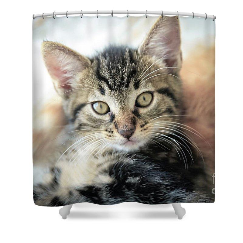 Animal Shower Curtain featuring the photograph Kitten Looking by Tetyana Ustenko
