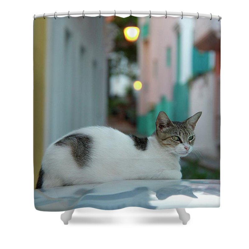 Old San Juan Shower Curtain featuring the photograph Kitten Reflections by Suzanne Oesterling