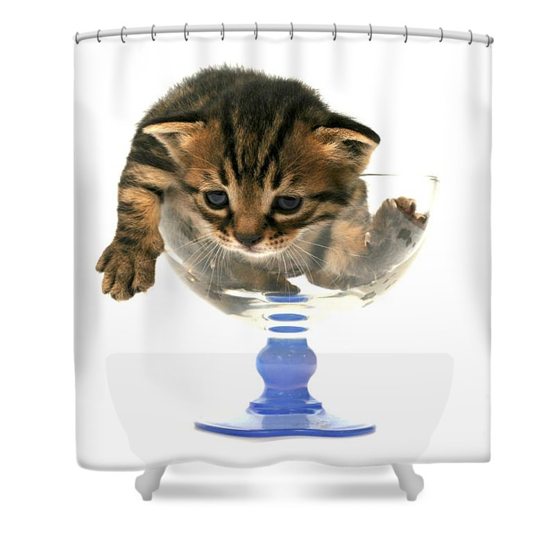 Cat Shower Curtain featuring the photograph Kitten Sits In A Glass by Yedidya yos mizrachi