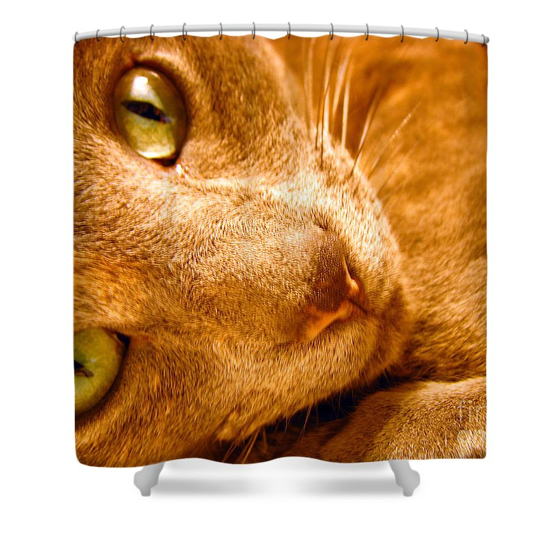 Cats Shower Curtain featuring the photograph Kitty by Amanda Barcon