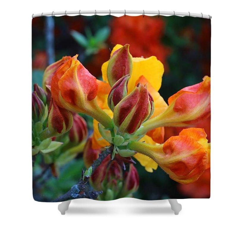 Klondyke Azalea Shower Curtain featuring the photograph Klondyke Azalea by Kathryn Meyer