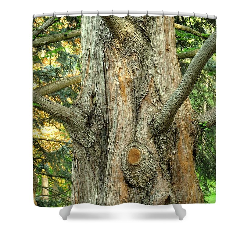 Tree Shower Curtain featuring the photograph Knarled by Ian MacDonald