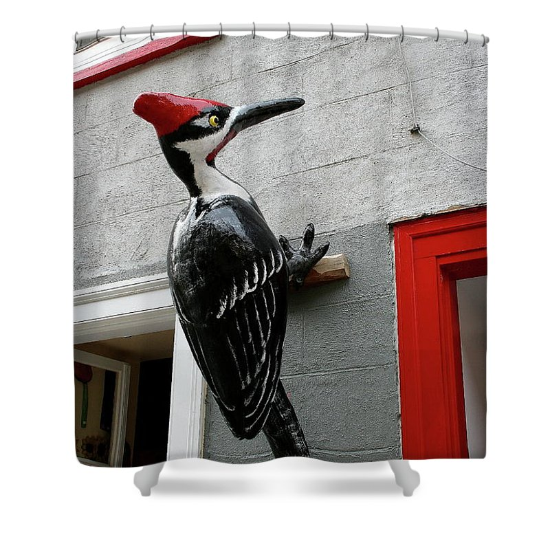 Woodpecker Shower Curtain featuring the photograph Knock On The Wall by Christiane Schulze Art And Photography