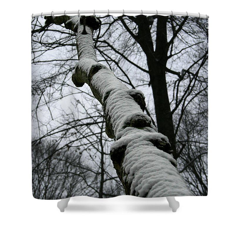 Nature Winter Snow White Cold Quite Peaceful Forest Woods Tree Cover Grey Knot Outdoor Shower Curtain featuring the photograph Knoted by Andrei Shliakhau