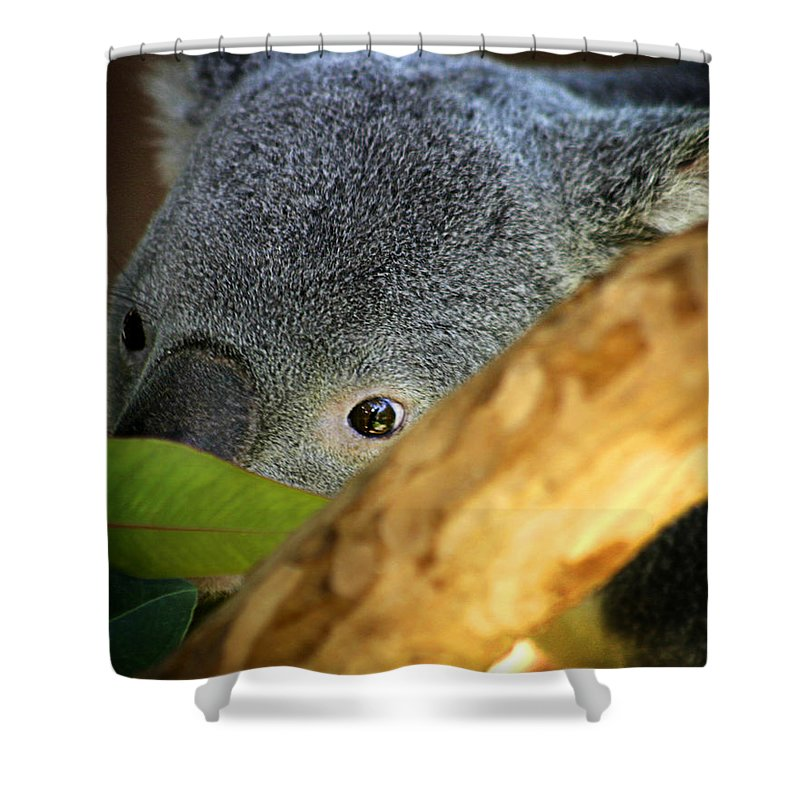 Zoo Shower Curtain featuring the photograph Koala Bear by Anthony Jones