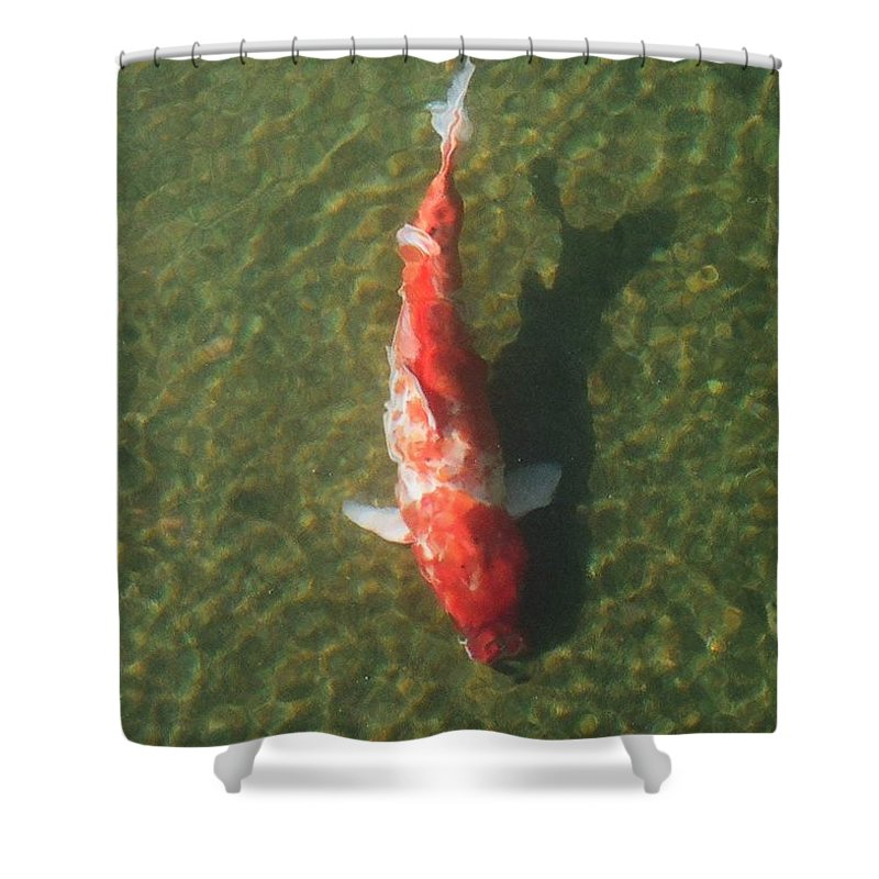 Koi Shower Curtain featuring the photograph Koi by Dean Triolo